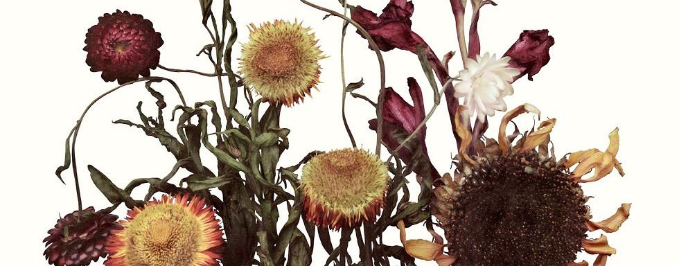 angelina McCormic flowers